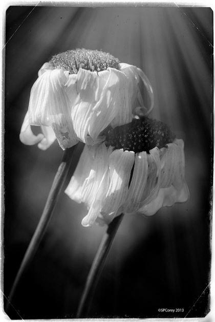 Forgotten. {Poem}