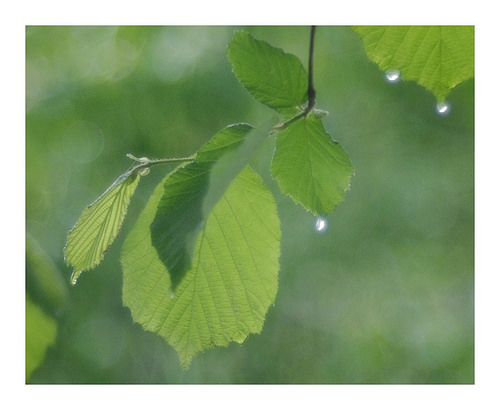 The Leaf That Would Be Rain: A Little Story of Self-Acceptance. {Parable}