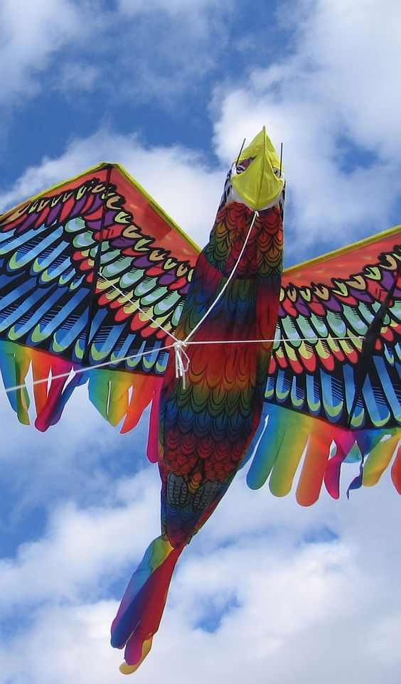 The Magic Bird Kite & What Really Mattered