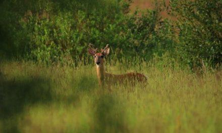 The Deer Whisperer