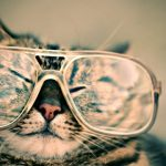 I Wanna Come Back as Your Cat: Lessons from the Animal Realm