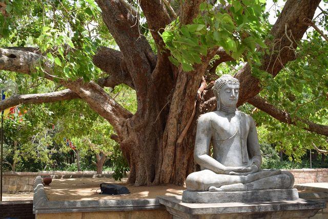 Mystical, Religious, Scriptural & Pragmatic Transmission in Zen