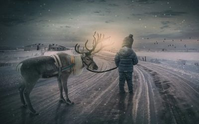 Bodhi Trees and Reindeer Paws: Walking the Path of Light