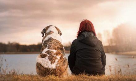 A Meditation for Pets