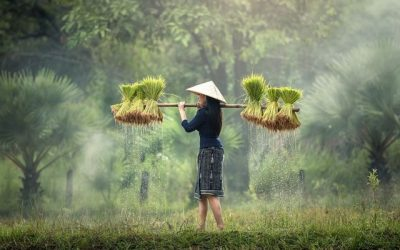 How Buddhist Practice is Like Cutting the Grass